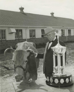 JC Penney with his prize winning Guernsey at UM Foremost Dairy, 1963.